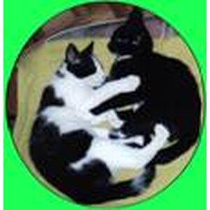 Kattenoppas Beverwijk logo