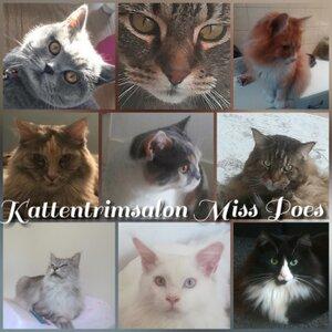 Ambulante Kattentrimsalon Miss Poes logo