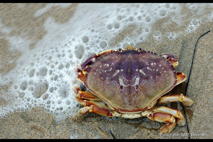 Vissen, recyclen, speuren en knutselen op het strand van Wijk aan Zee