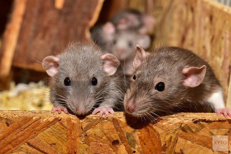Vijf bedrijven gesloten op Beverwijkse Bazaar na vondst muizenkeutels en -urine