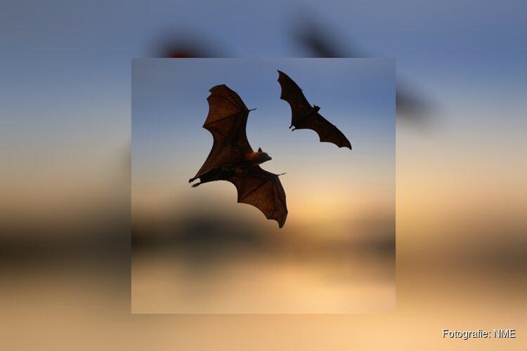 Terugblik op de avondwandeling Nacht van de Vleermuis