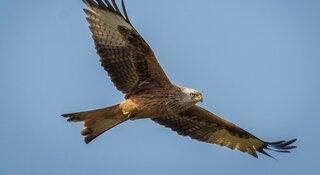 Roofvogellezing voor volwassenen op 18 mei in het Koetshuijs