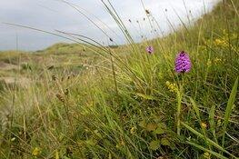 Fotowandeling voor volwassenen op 23 juni in het Noord-Hollands Duinreservaat