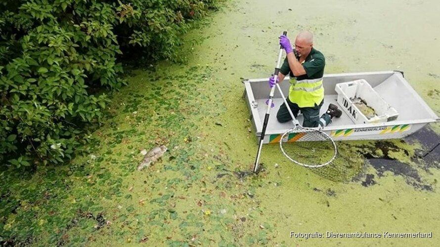 Meer dan 100 dode vissen gevonden in vijver Heemskerk