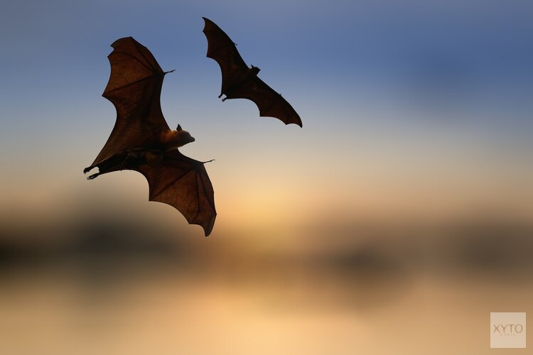 Op zoek naar vleermuizen in Beverwijk en Heemskerk