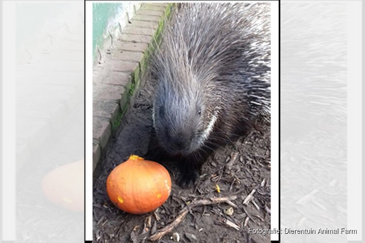 Halloween op Dierentuin Animal Farm, maar dan anders