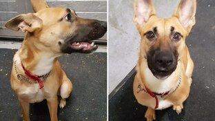 Puppy vermoedelijk achtergelaten: politie zoekt eigenaar